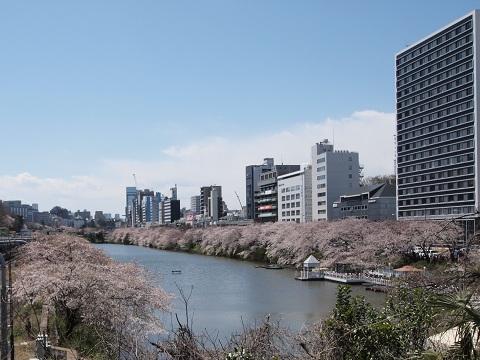Iidabashiohorisakura