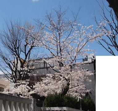 Kagurasakabishamonten