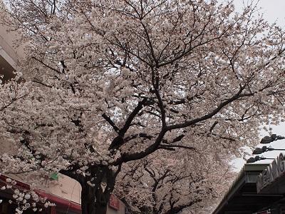 Sakurafd1super130323