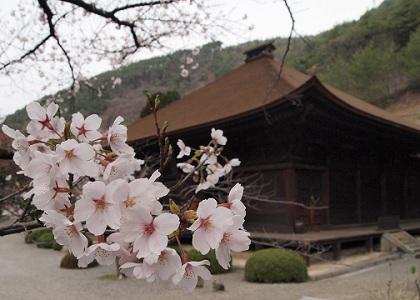 Daizenjihondo_130331